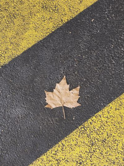 High angle view of dry maple leaf on street