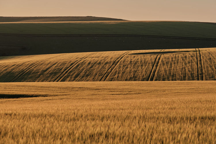 Wheat fields on a sunny evening in the south downs national park with shadows onthe hills