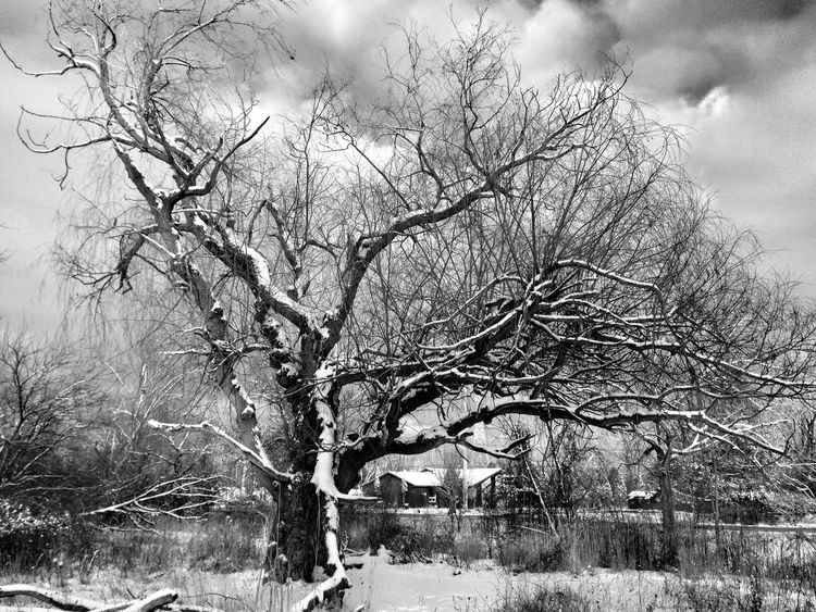 Bare Tree Branch Tranquility Tree Landscape Tranquil Scene Scenics Nature Beauty In Nature Non-urban Scene Field Day Solitude Remote Outdoors No People Cloud - Sky Countryside winter Ontario Windsor