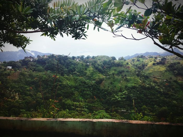 Taking Photos EyeEm Nature Lover My View Where I've Been Today At Work Paramin Hills Rainy Days Misty Morning
