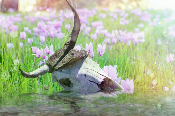 Animal Wildlife Grass Nature Outdoors No People Beauty In Nature Skull Cowhead Water Flower Reptile Multi Colored