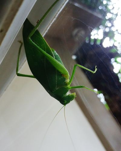 Insect Close-up Animal Themes One Animal Leaf Animals In The Wild Nature Animal Wildlife No People Spider Web Fragility Outdoors Day Beauty In Nature Adapted To The City Nature Morning Sun Tranquility Beauty In Nature