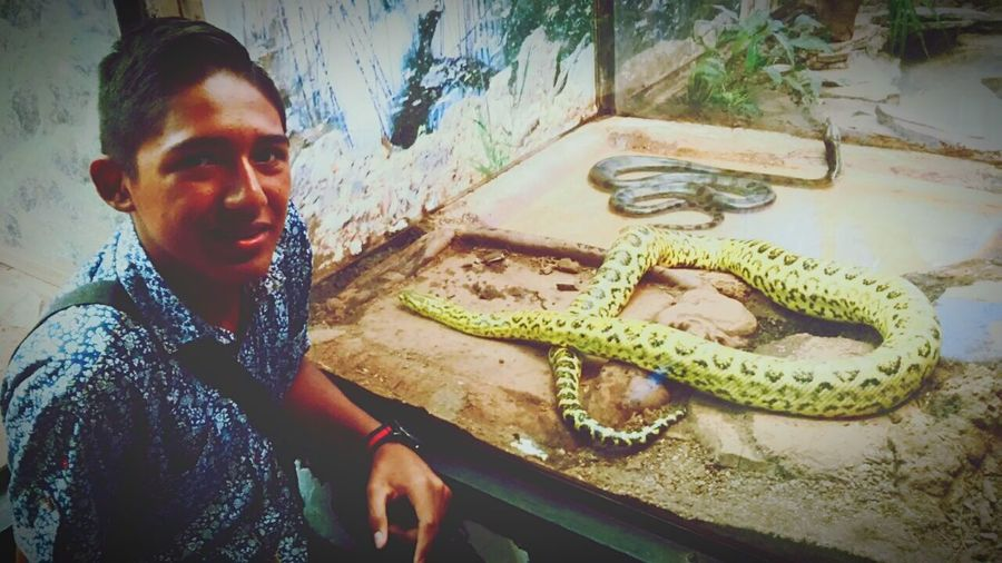 Snakes ZOO-PHOTO