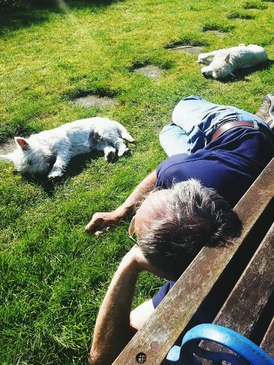 The Three Snoozers Relaxing Loscoe Sunshine