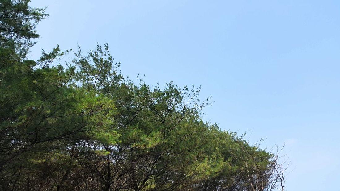 Tree Nature No People Treetop Green Blue Sky Newbie Here Newbie Ugly Photoes