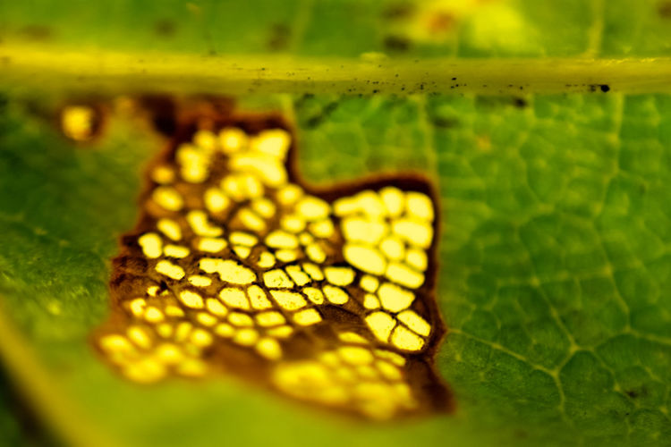 Animal Themes Beauty In Nature Close-up Day Freshness Leaf Nature No People Outdoors Selective Focus Yellow