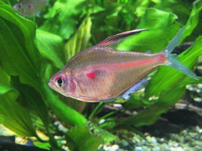 Fish Nature аквариумная рыбка океанариум москвариум First Eyeem Photo