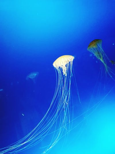 Jerryfish Aquarium Photography Honor 8