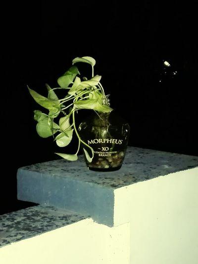 Night 🌙🌌 Plant Morpheus Beauty Nature