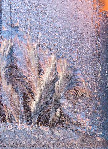 Eisblumen Am Fenster Wintertime Frosted Glass