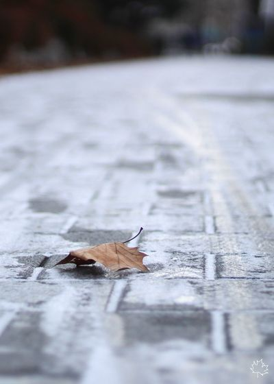 From Autumn to Witner Road Snow Sniw Winter Selective Focus Animals In The Wild No People Nature Close-up Outdoors Day