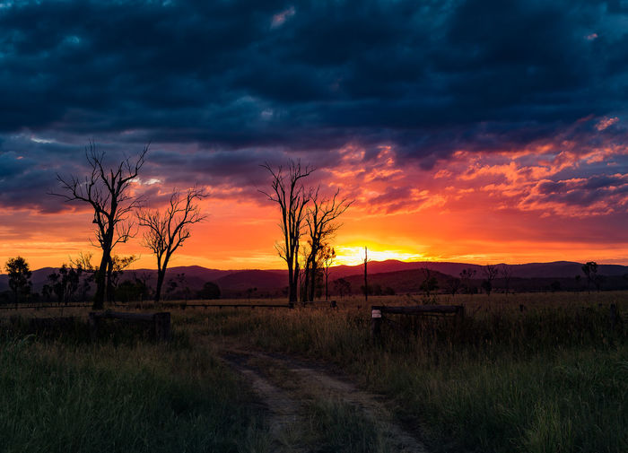 SUNSET IN THE BUSH Australian Bush Photography Farm Entrance Highway, Skies Beauty In Nature Brilliant Sunset Bush Farm Bush Fence Cloud - Sky Curved Dirt Track Dead Trees In Silouette Distant Mountains Dramatic Sky Dramatic Sunset Environment Field Grass Land Landscape No People Orange Color Outdoors Scenics - Nature Sky Sunset Tranquility