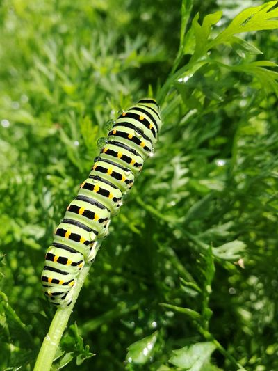 One Animal Green Color Insect Nature Animal Themes Focus On Foreground Outdoors Full Length Grass