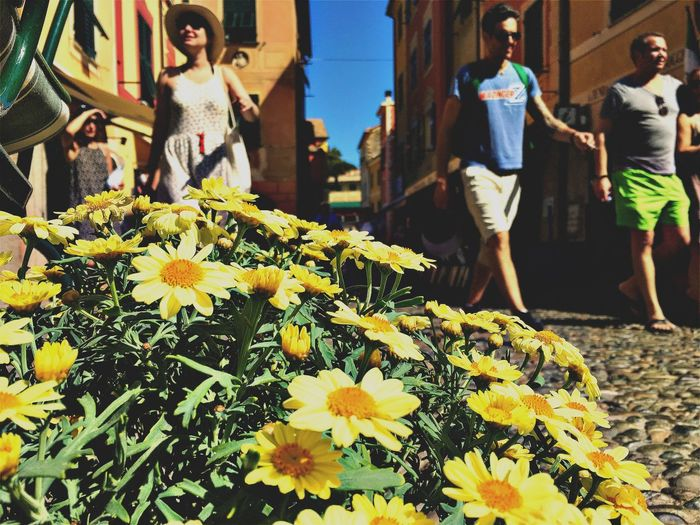 Portofino. EyeEm Gallery EyeEmNewHere Beauty In Nature Blooming Close-up Day Flower Flower Head Fragility Freshness Growth Italy Lifestyles Men Nature One Person Outdoors People Petal Plant Popckorn Real People Sunflower Sunlight Women Yellow
