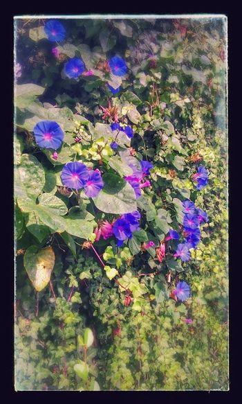 Walking Around Relaxing Taking Photos Flowers
