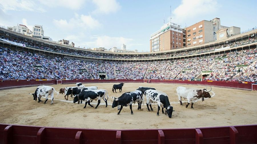 Toros Valencia, Spain Bulls Bullfighting Toreo  España Bueyes Cabestros First Eyeem Photo Showcase: December