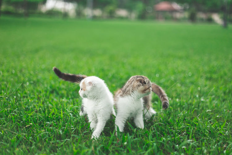 Two cats on grass