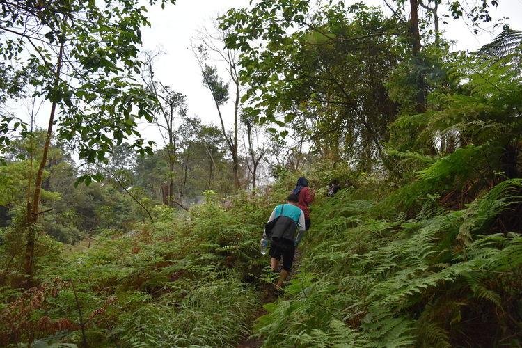 Gunung Salak Kawah Ratu Gunung Salak Salak Mountain Adventure Beauty In Nature Forest Hiking Outdoors