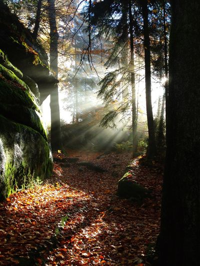 Morgenstunde am Waldstein Waldstein Fichtelgebirge Nature Natural Beauty Sunrise