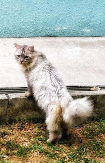#cats Pets