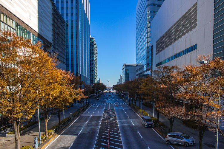 Japan Road Travel Architecture Autumn Building Building Exterior Built Structure Change City Day Diminishing Perspective No People Outdoors Plant Skyscraper Street The Way Forward Transportation Travel Destinations Tree