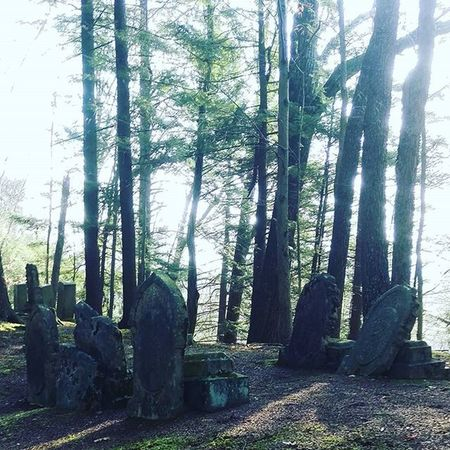 Exploring Blessed  Bestoftheday Beautiful Cemetery Nature Old Time Recoveryispossible SoberLife  Lifeisgood