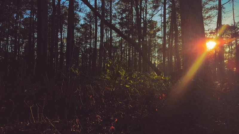 Sunset while hunting Smartphonephotograhy Smartphone Photos Samsung Galaxy Note 5 Woods Forest Sunset Hunting Peace And Quiet Peaceful Nature
