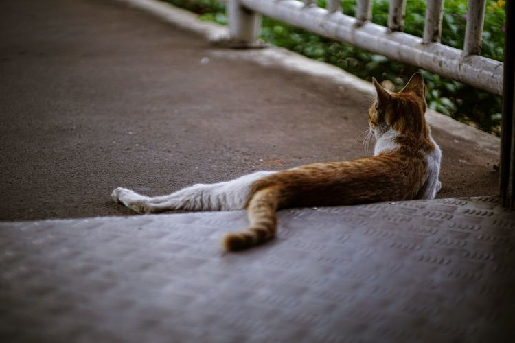 High angle view of a cat resting on footpath