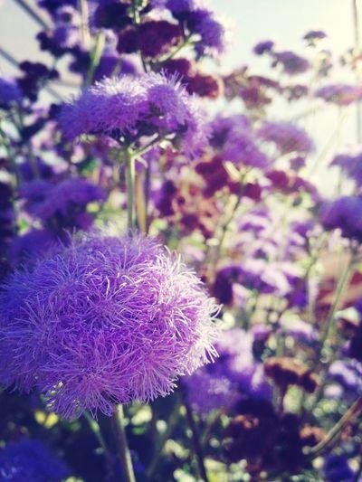 muppet flowers