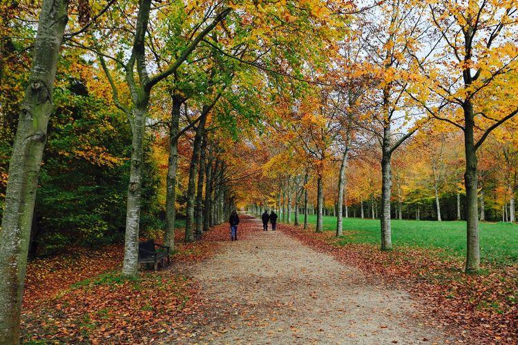 Rear view of people walking in park along trees