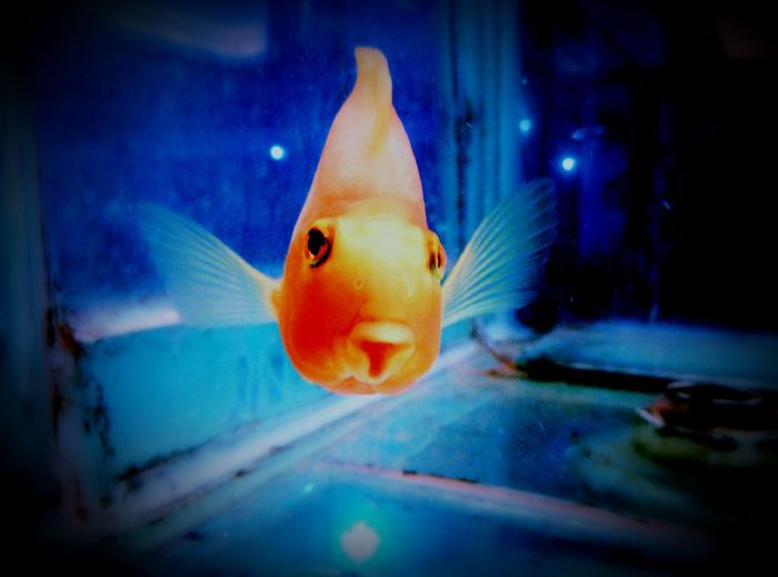 A fish which attracts more to my eye in a marriage hall..