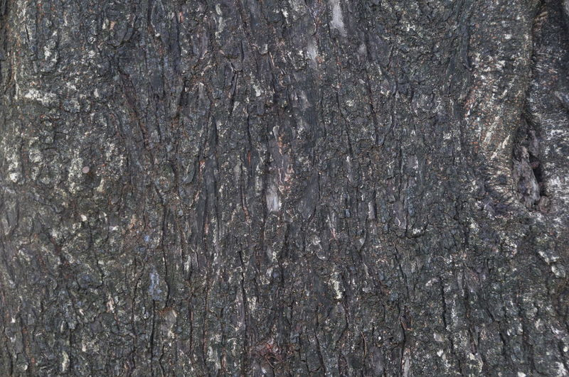 Backgrounds Close-up Day Full Frame Nature No People Outdoors Pattern Textured  Tree Tree Trunk Wood - Material Wood Grain