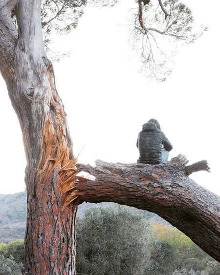 Fractures. Tree