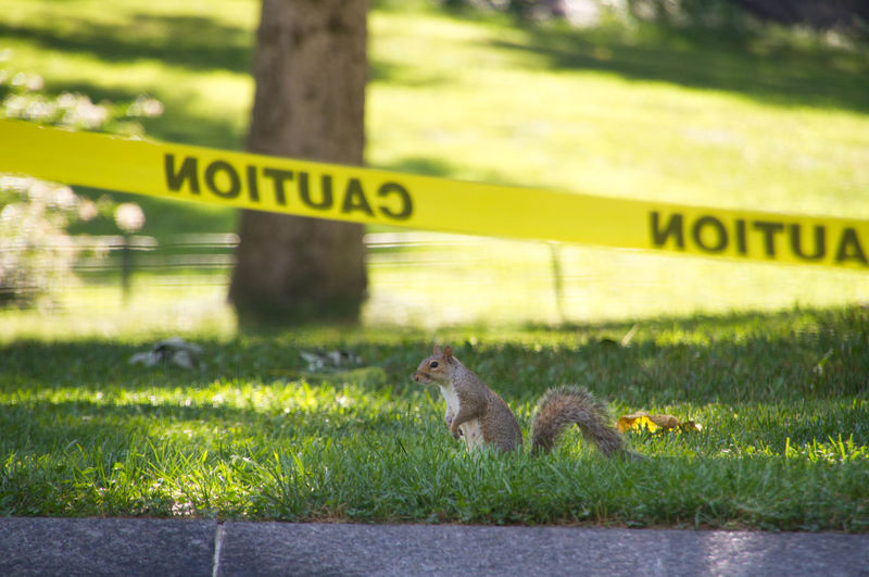 Nature Tranquility Beauty In Nature Squirrel Squirrels Park Animals Animal Wildlife Animal Photography Squirrel In Park Cute Grass Squirrel From The Side