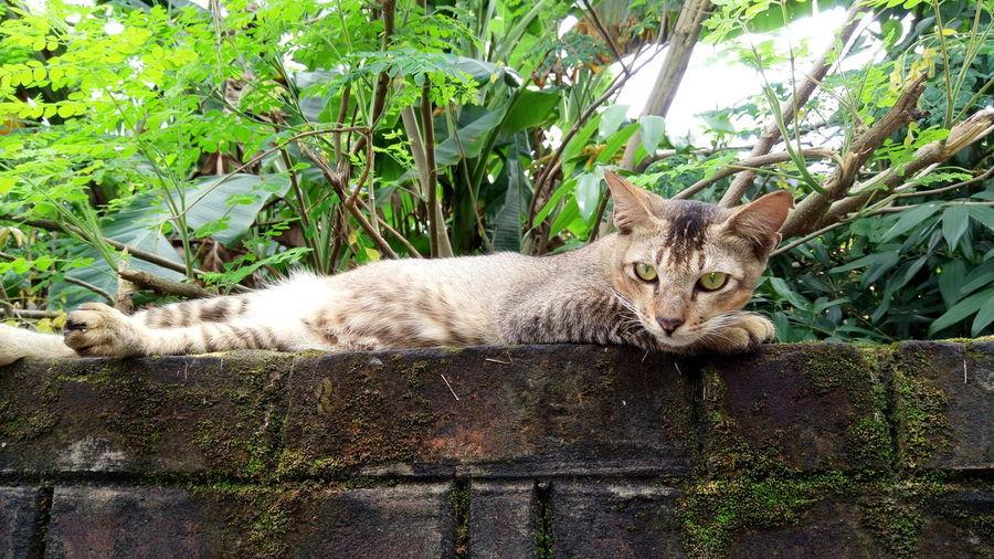 Portrait of cat lying on retaining wall