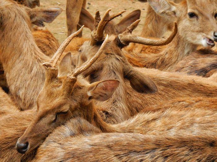 Deer Animal Themes No People Animal Body Part Close-up Animal Wildlife Full Frame Animals In The Wild Animal Skin Nature Day Animal Scale Mammal