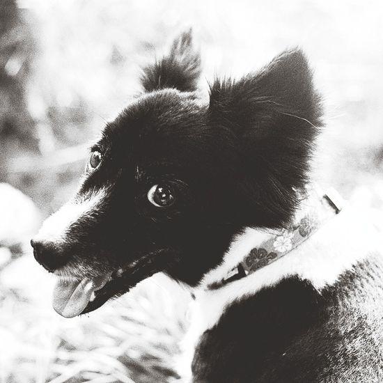 Blackandwhite Dog Doggie Love