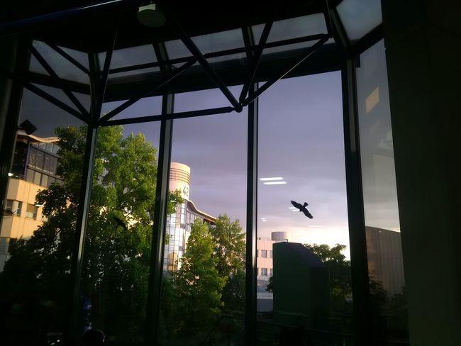 aus der Mensa der TU-Kaiserslautern ein Sonnenuntergang reflektiert an Gebäude 42 Original Photography Z30 High Contrast Shapes