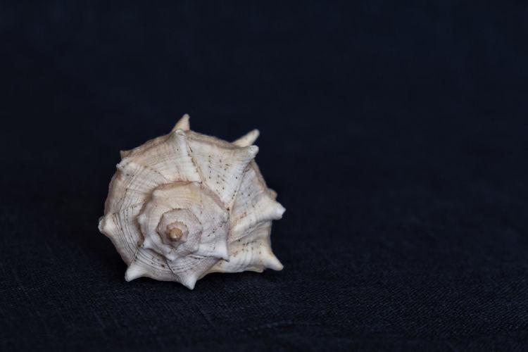 shell on a dark