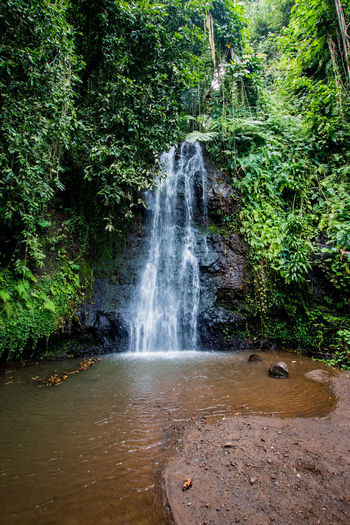 a waterfall in the rainforest of tahiti French Polynesia Beauty In Nature Day Flowing Flowing Water Forest Green Color Land Long Exposure Motion Nature No People Outdoors Plant Power In Nature Rain Forest Rainforest Rock Rock - Object Scenics - Nature Solid Tahiti Tree Water Waterfall The Great Outdoors - 2018 EyeEm Awards