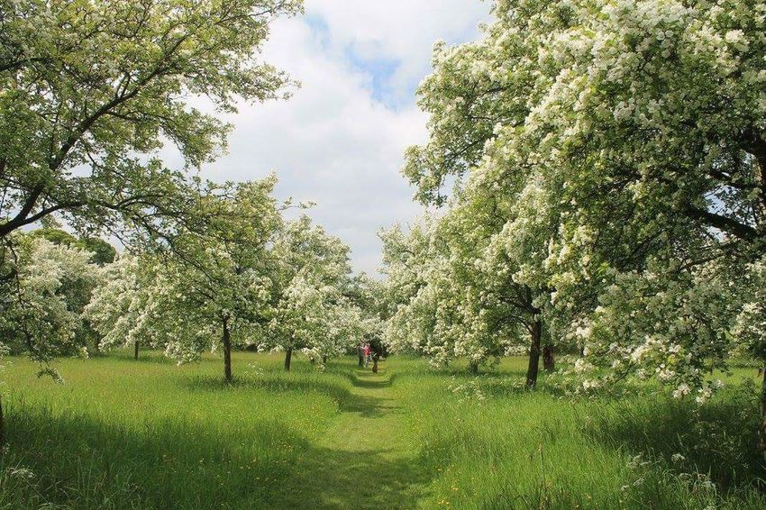 The beautiful gardens at Hardwick Hall, i loved these trees with all the blossom on 💚 Trees Blossom National Trust From My Point Of View Nature_collection EyeEm Nature Lover Streamzoofamily Day Out Beautiful Derbyshire Wonderful View Hardwickhall HardwickPark