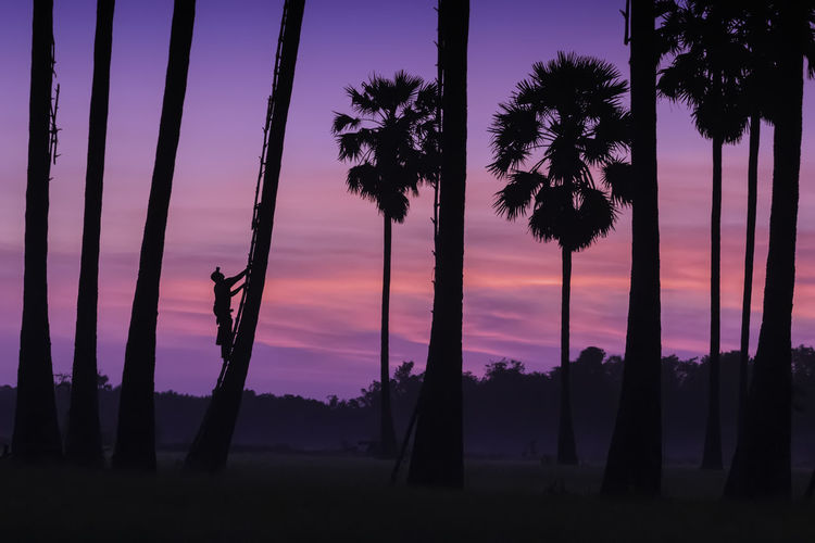 Silhouette palm trees on field against sky at sunset