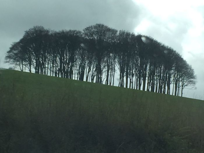 When you come over the crest of the A30 and see these trees, you know you're back in Cornwall 😃 Cornwall Holiday Lovecornwall Nofilter#noedit