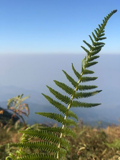 Close-up of fern against clear sky