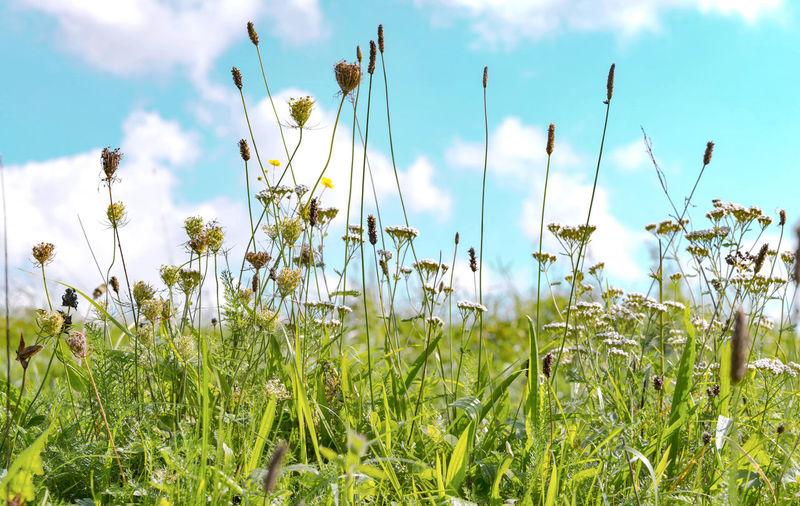 A field of