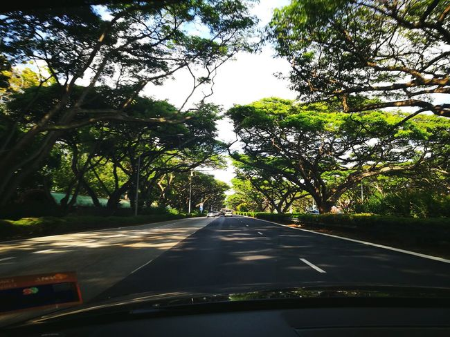 Car Transportation Road Tree Car Interior Windshield Car Point Of View No People Dashboard Driving Journey The Way Forward Land Vehicle Outdoors Road Trip Sky Nature Day Shaded Shadow Trees Green Umbrela