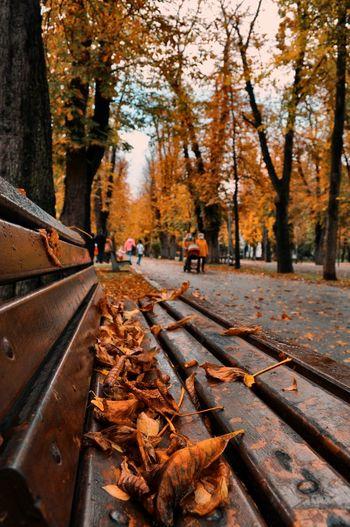 Autumn leaves on railroad track