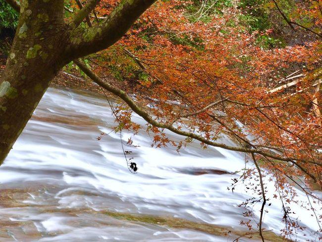 養老渓谷 養老の滝 粟又の滝 滝 Nature Beauty In Nature Outdoors Tree Tranquility No People Day Scenics Water Close-up