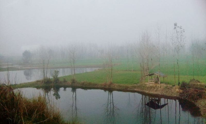 Nature_collection Nature_perfection AJ Photography Foggy Weather