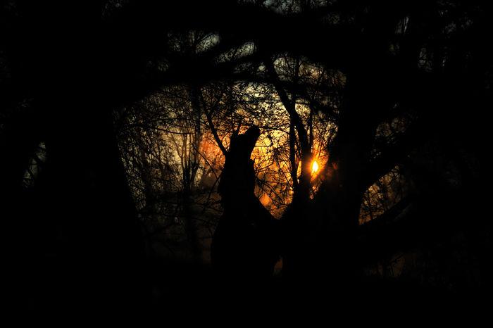 #EyeEm #followme #sigueme #follow #teamEyeEm #teamfollow #teamhurley #teamsurf #surf #backyard #cute #hdr #allshots #teamcute #p #eyembestshot #nature_collection #EyeEmNaturelover #nature #Poland #sunset #sun #clouds #skylovers #sky #nature #beautifulinnature #naturalbeauty #photography #landscape Beauty In Nature Growth Idyllic Nature No People Non-urban Scene Outdoors Remote Scenics Sky Tranquil Scene Tranquility Tree